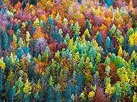XTTYXF パズル、大人のためのパズル1000ピースジグソーパズル大きなおもちゃ虹色の森Diy教育知的パズル