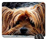Mouse Pads - Dog Yorkshire Terrier Lazy Dog Portrait