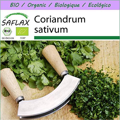 SAFLAX - BIO - Koriander - 150 Samen - Coriandrum sativum