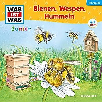 30: Bienen, Wespen, Hummeln