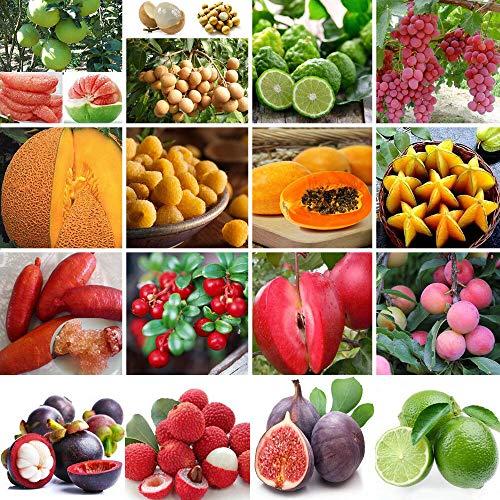 Samen-Paket: 40Pcs Kakao Fruchtsamen: Garten Verschiedene Gemüse, Obst, Samen Nicht-GVO-essbaren Samen Bio-Saatgut