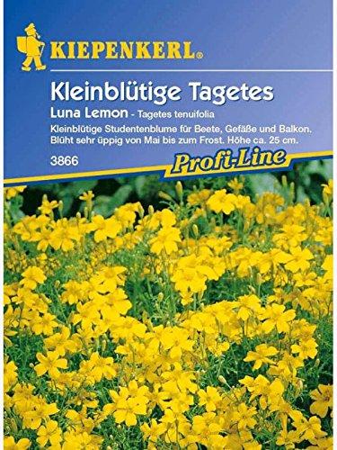 Tagetes tenuifolia Luna Lemon
