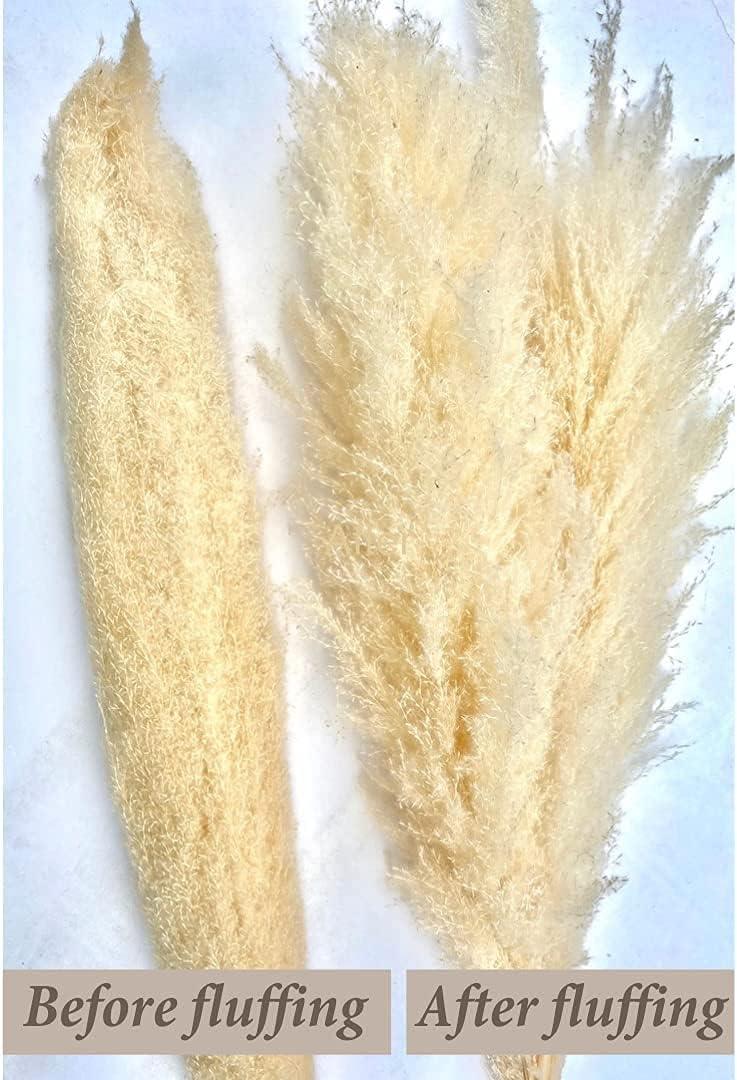 Buy KEOKI Extra Large Pampas Grass for Vase   21 Stems, 21 cm/21 ...