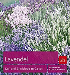 lavendel pflege wichtige tipps garten mix. Black Bedroom Furniture Sets. Home Design Ideas