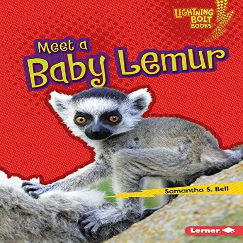 『Meet a Baby Lemur』のカバーアート