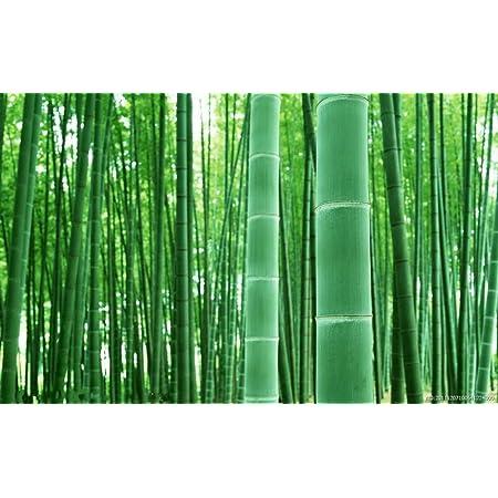 Asklepios-seeds® - 50 Semillas de Phyllostachys pubescens Bambú moso, Phyllostachys edulis, bambú de invierno