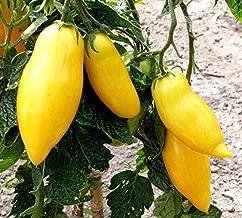 40 Banana Legs Tomato Heirloom Yellow Lycopersicon Fruit Vegetable Seeds