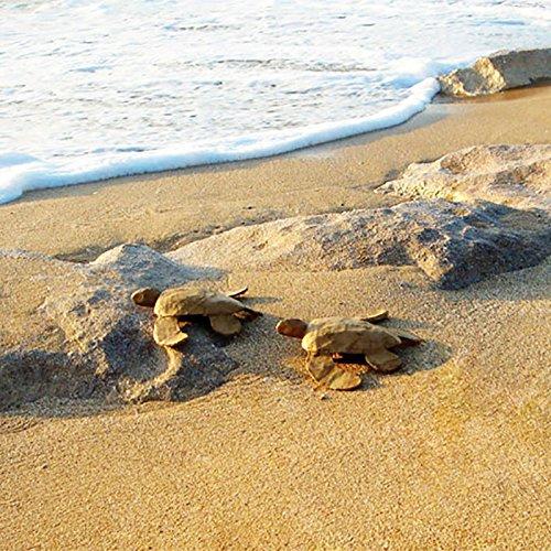 Mar Tortuga Biodegradable cremación – pequeño: Amazon.es: Hogar