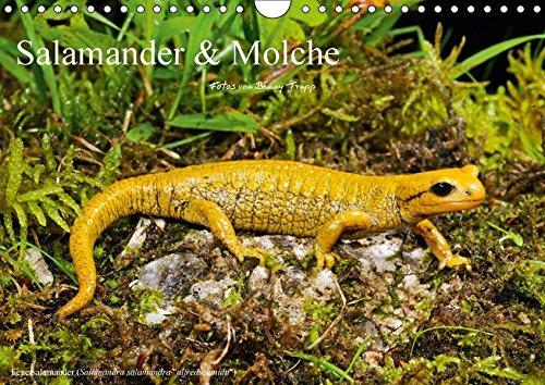 Salamander und Molche (Wandkalender 2018 DIN A4 quer): Fotokalender mit Bildern von Molchen und Salamandern (Monatskalender, 14 Seiten ) (CALVENDO Tiere) [Kalender] [Apr 01, 2017] Trapp, Benny