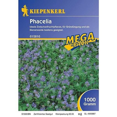 Phacelia -1 kg Gründünger Mega-Pack