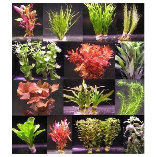 Aquarium Pflanzen Amazon De