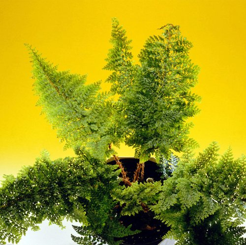 3 paquets de Clover Seed / Pack 1 100 Graines Trifolium Potted Paysage Herbe Feuillage Graines de F011