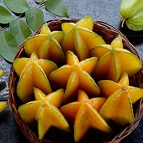 TENGGO Egrow 50 Teile/Paket Carambola Samen Garten Sementes Averrhoa Star Obst Baum Samen Woody Pflanzen