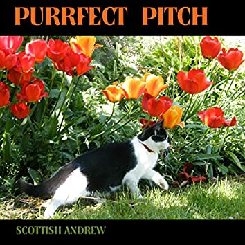 Purrfect Pitch