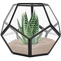 Banord Black Tabletop Geometric Terrarium 7.8x7.8x6.5-in