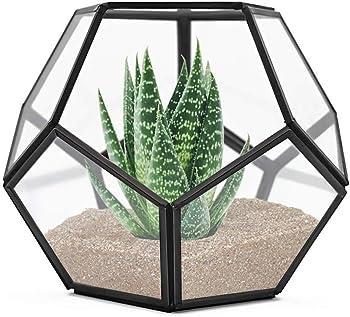 Banord Black Tabletop Geometric Terrarium