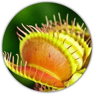Venere acchiappamosche 10 semi SAFLAX Set per la coltivazione Dionaea muscipula