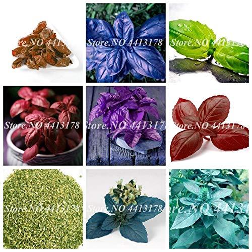 SANHOC Vente! 300 pcs/Grand Sac Feuilles de Basilic Frais Bonsai Vert ocimum légumes épices Herbes aromatiques végétales Bonsai Jardin des Plantes: Fleurs Mixtes