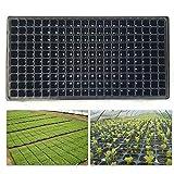 DEDC - Bandeja de 200 celdas para invernadero