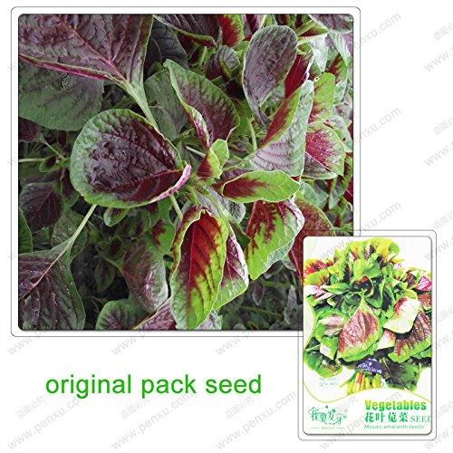 40 graines/Pack, mosaïque amarante, graines d'amarante, balcon jardin feuillage des plantes en pot salade de légumes biologiques