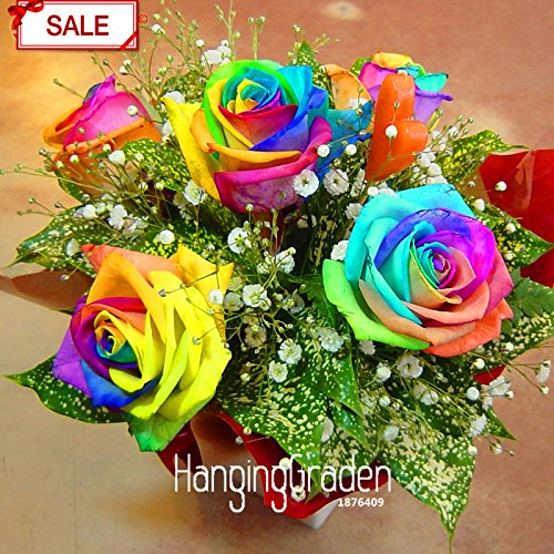 Hot Sale! Graines Promotion folle Rainbow Rose bricolage jardin Colorful Rose Plante Fleur, un paquet de 50 graines, # YLAVWV