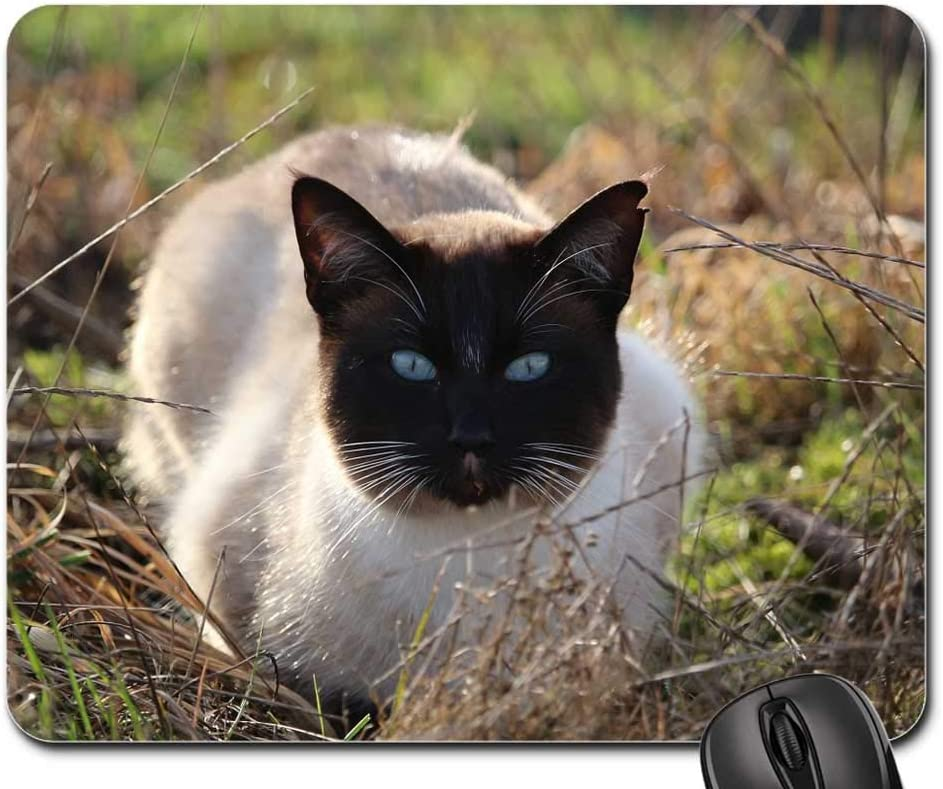 Mouse Pad - 25% OFF Cat Siamese Grass Blue Max 67% OFF Eye Eyes