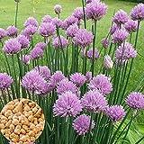 C-LARSS 3000pcs / Bolsa De Semillas De Plantas, Fácil De Plantar Semillas De Cebollino Chino Anual Productivo De Alto Rendimiento Para Patio Semillas de cebolla verde ezo