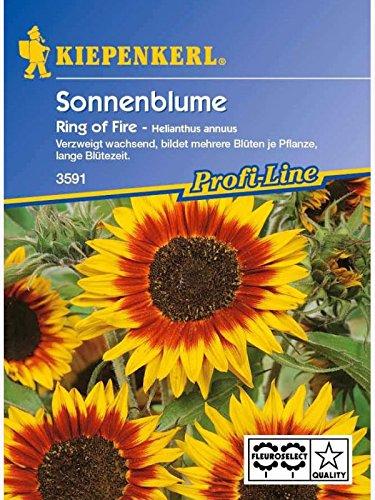 Kiepenkerl Kiepenkerl Sonnenblumen