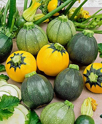 Qulista Samenhaus - 20pcs Zucchini in 3 Sorten - Saat Bio-Samen ertragreich aromatisch Saatgut Gemüse Samen winterhart