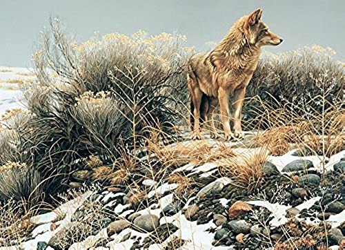 oferta especial Cobble Hill Coyote in Winter Sage Jigsaw Puzzle, 1000-Piece by by by Cobble Hill  más orden