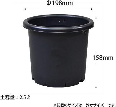 アップルウェアー 菊鉢 6号 ブラック