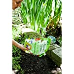 Natures Haven Easy Wildflower Mix, 1.5 kg