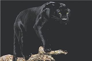 Studio B Black Panther Poster