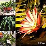 50 semi di epiphyllum seeds bonsai ornamentali per la casa e il giardino – semi di epiphyllum