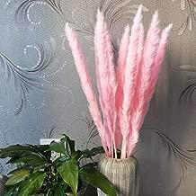 Renxinu 15 Pcs Dried Pampas Grass Reed Home Wedding Flower Bunch Decor (Pink)