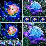 100 Pcs Blue Pink Rose Flower Seeds Plant Fresh Garden Seeds Home Garden Yard Balcony Bonsai Decor Seeds, Gardeners Choice!