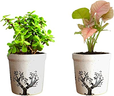 Ceramic Set of 2 Planter Pots White Color Without Plants for Indoor and Outdoor