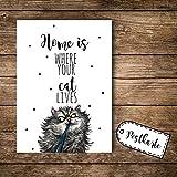 ilka parey wandtattoo-welt A6 Postkarte Ansichtskarte Flyer Katze mit Spruch Home is Where Your cat Lives pk092