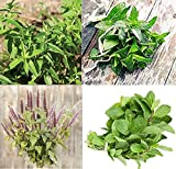 David's Garden Seeds Collection Set Herb Mint 4418 (Multi) 4 Varieties 1300 Non-GMO, Open Pollinated Seeds