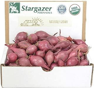 Stargazer Perennials Red Baron Onion Sets 8 oz | Organic Non-GMO Bulbs - Easy to Grow