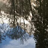 Keith Levit/Design Pics – Reflection of Trees and a