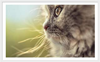 Best cat face photo collage Reviews