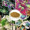 puran Lot de 100 graines de coleus faciles à survivre, embellissement coloré, graines de bonsaï vivaces pour la maison, la cour, pour faire pousser vos propres pots – Graines de coleus #1