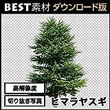 【BEST素材】高解像度の切り抜き写真_ヒマラヤスギ01 [ダウンロード]
