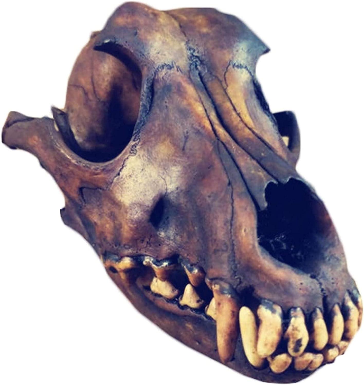 YQQQQ Animal Skull Model Genuine Bones Taxidermy Wolf Sku Max 54% OFF NEW before selling
