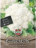 Sperli Gemüsesamen Blumenkohl Erfurter Zwerg, grün