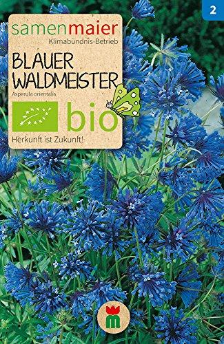Samen Maier 800 Blauer Waldmeister (Bio-Waldmeistersamen)
