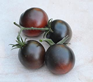 Chestnut Chocolate Tomato Seeds - 5+ Rare Seeds + FREE Bonus 6 Variety Seed Pack - a $29.95 Value! Packed in FROZEN SEED CAPSULES for Growing Seeds Now or Saving Seeds For Years
