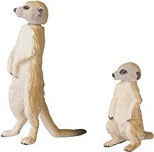 meerkat manor 2017
