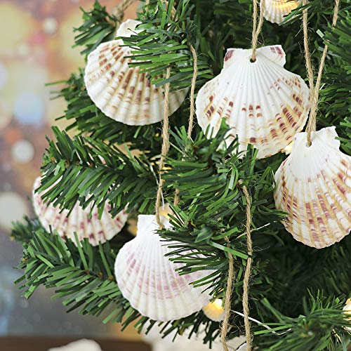 Hanging Christmas Tress Decoration 10pcs,Natural Shell with Rope 2.5-3.5 Inch, Seashell Ornaments for Beach Wedding